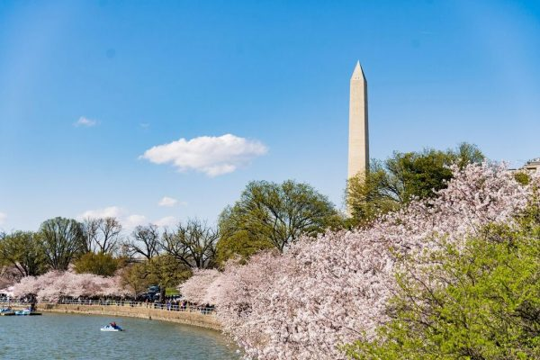 2018 National Cherry Blossom Festival Washington DC credit Michael Jordan/BPE