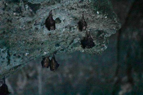Next Exit Travel Bahamas Bat Cave credit Davida G. Breier