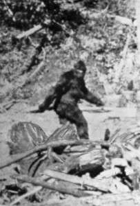 Real or fake? The famous Bigfoot image captured in 1967 by the late Roger Patterson.