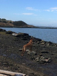 The dog hanging out at the Albany Bulb across the bay from San Francisco. (Photo by Sarah Abruzzese)