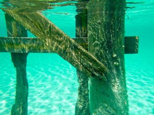 Underwater look at the dock at Jaws Beach New Providence Island credit Davida G. Breier