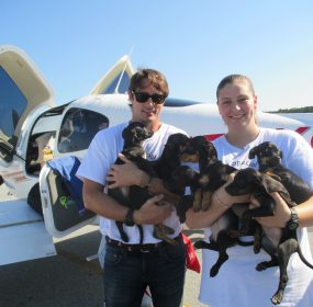 Lorenzo-Borghese-with-puppies